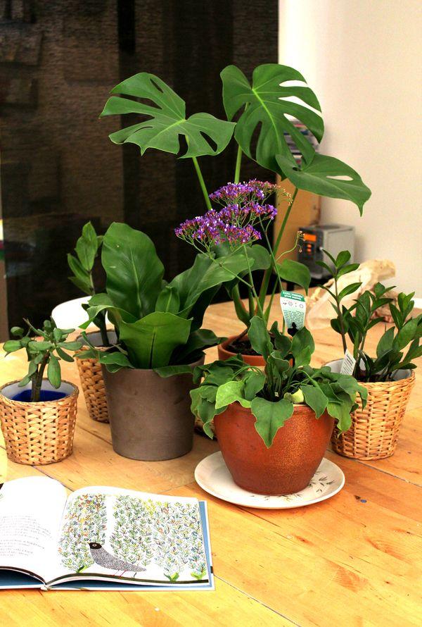 Tico plants
