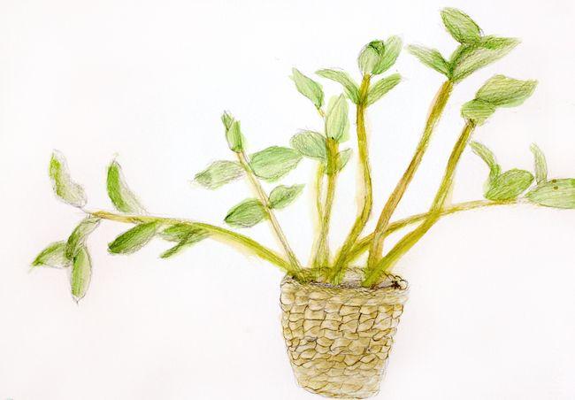 Bigs kids plant
