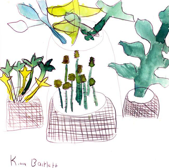 Kiaras plants